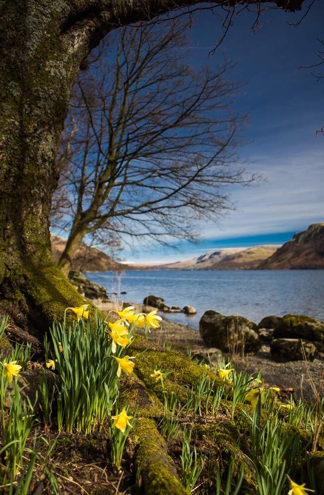 Wordsworth\'s daffodils